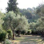Villa indépendante - T9 - 340 m² - Les Routes