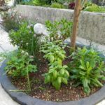 landrodie-plantes